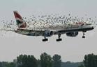 «الطيور» تسبب في كوارث «الطائرات أحيانًا».. والخسائر «1.2 مليار دولار» سنويًا