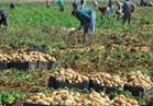 الكويت ترفع الحظر المؤقت على الصادرات الزراعية المصرية