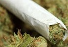 مكافحة المخدرات: ضبط 155 كيلو بانجو بـ 8 محافظات