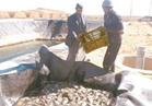 شمال سيناء.. منازل بدوية و10 أفدنة لكل أسرة