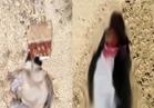 عاجل  مقتل تكفيريين وتدمير عدد من الأوكار الإرهابية بوسط سيناء  صور