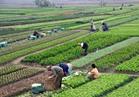 «الزراعة» و «الفاو» يعقدان منتدى دولي للإستثمار ديسمبر المقبل