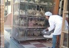 حملة لتطهير محال الطيور للوقاية من أنفلونزا الطيور بالبحر الأحمر