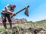 خبراء اقتصاد يضعون روشتة لعلاج البنية الزراعية «المدمرة»