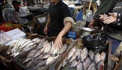 انخفاض أسعار الأسماك اليوم في سوق العبور