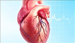 تعرف على أثر الدهون على عضلة القلب
