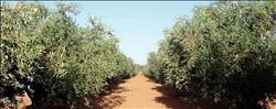 «الزراعة»: معالجة 2483 وحدة ضد النمل الأبيض في 16 محافظة