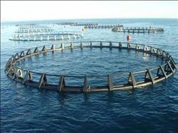 """اليوم.. ندوة """"الاستزراع السمكي في مصر"""" بمركز الدراسات الاقتصادية"""