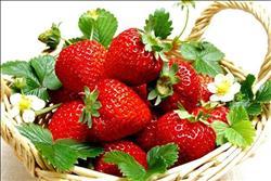 تعرف على توصيات «الزراعة» لمزارعي الفراولة خلال فبراير الجاري