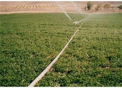 مشروع «غرب المنيا» نموذج زراعي متكامل