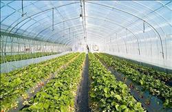 «نقابة الفلاحين» تشيد بمشروع الـ 100 ألف صوبة زراعية