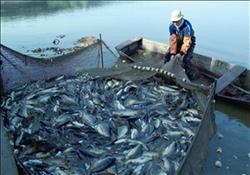 ضبط 21 قضية تلاعب في مجال الأسماك واللحوم ومصنعاتها