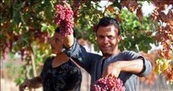 ننشر توصيات الزراعة لمزارعي العنب خلال شهر فبراير