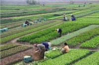زراعة أسيوط : وصول 111 ألف كارت ذكى لتوزيعها على الفلاحين