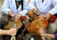 الصين تسجل أول إصابة بشرية بفيروس إتش7إن4 المسبب لإنفلونزا الطيور