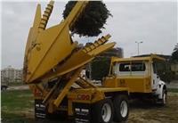 جهاز القاهرة الجديدة يستعين بماكينة متخخصة لنقل الاشجار النادرة
