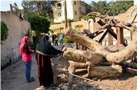 ننشر خطة وزارة الآثار لترميم «منطقة المطرية»