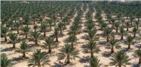 «الزراعة» تصدير تقاوي وشتلات الحاصلات وفقا للمواصفات القياسية