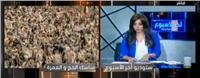فيديو.. «شيحة»: الدولة تدعم نصف مليون معتمر كل عام