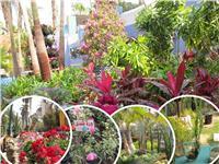 استعداداً للربيع.. زهور «الأورمان» تنشر «إكسير السعادة» بين المصريين |صور