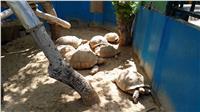 في عيد ميلادها الـ 127 سرقة حديقة الحيوان