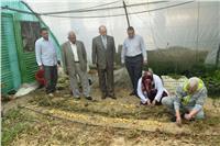 إنتاج تقاوي جديدة لمحصول البطاطس بجامعة السادات