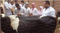 قافلة بيطرية من جامعة بنها لقرية قرنفيل بالقناطر