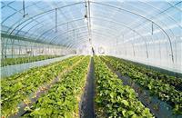 تعرف على تسهيلات الزراعة للتوسع في مساحات «الصوب الزراعية»