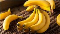 ننشر التوصيات الفنية لمزارعي «حدائق الموز»