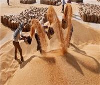 محافظ الجيزة: 10% زيادة في توريد القمح هذا العام