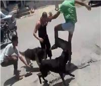 النيابة: المخدرات السبب في تعذيب شاب بـ«الكلاب الشرسة» بحلوان