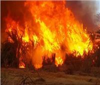 السيطرة على حريق مزرعة مانجو في الهرم دون إصابات