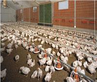 «الزراعة» ترخيص 783 مشروع للثروة الحيوانية والداجنة والأعلاف