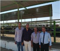 «مصر الخير»: لدينا 100 ألف رأس ماشية