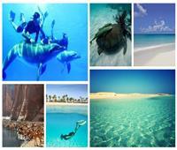 «مرسى علم»..بين بحر وجبل ورمال الجنة على الأرض