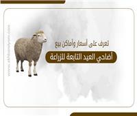 إنفوجراف   تعرف على أسعار وأماكن بيع أضاحي العيد التابعة للزراعة