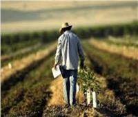 الحكومة الأمريكية تدفع 4.7 مليار دولار للمزارعين تخفيفا لأثر الرسوم