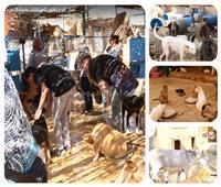 فيديو| فندق الحيوانات الضالة.. رجل أعمال تبني حمارا.. والأجنبيات يفضلن الكلاب البلدي