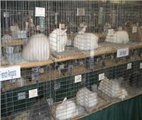 وزارة الزراعة تصدر قراراً بتنظيم صناعة الأرانب