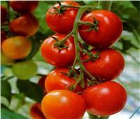 نقيب الفلاحين يطالب المواطنين بترشيد استهلاك الطماطم