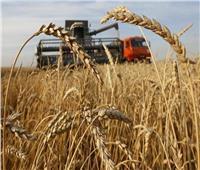 «نقيب الفلاحين» نحتاج 6 مليون فدان للاكتفاء الذاتي من القمح