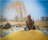 فيديو| الزراعة: مصر ستنتج تقاوي محلية ولن تستوردها من الخارج