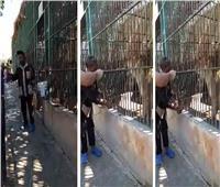 فيديو| إيقاف عامل بحديقة حيوان الإسكندرية لضربه «أسدًا» أمام الزائرين