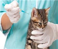 «نقابة الفلاحين»تطالب الزراعة بتوعية المواطنين بتطعيم القطط