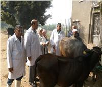 «الزراعة» تواصل حملتها القومية للتحصين ضد مرض الحمى القلاعية