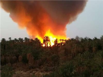 فيديو| «الزملوط»: تم التعامل مع حريق «الراشدة» ولا خسائر في الأرواح