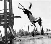حكايات| مسابقة محرمة للخيول في الطيران والسباحة.. تنافس مصارعة الثيران