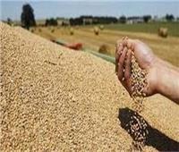 اليوم.. نظر إشكال منع استيراد القمح الروسي المصاب بـ«الإرجوت»