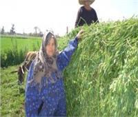 غدا..العالم يحيي اليوم الدولي للمرأة الريفية