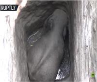 فيديو| لحظة إنقاذ «فيل صغير» عالق في بئر